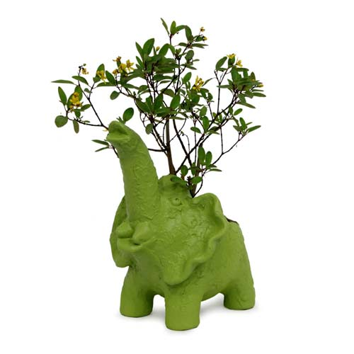 Order Plant In Elephant Vase Online Buy And Send Plant In Elephant