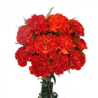 Red-carnations-510x510