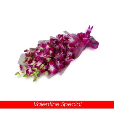 Orchids Special