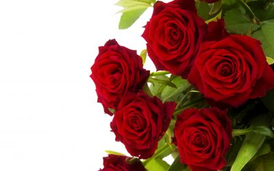ROSE DAY: The Sweetest Gesture of Love
