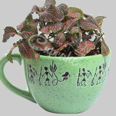 Cuppp of Fittonia Pink