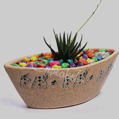 WACC SPECIAL Succulent with boat feel