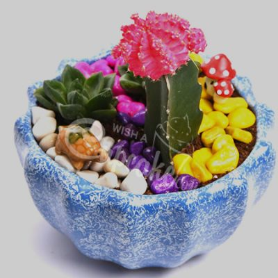 WACC SPECIAL Succulent with beautifull basket