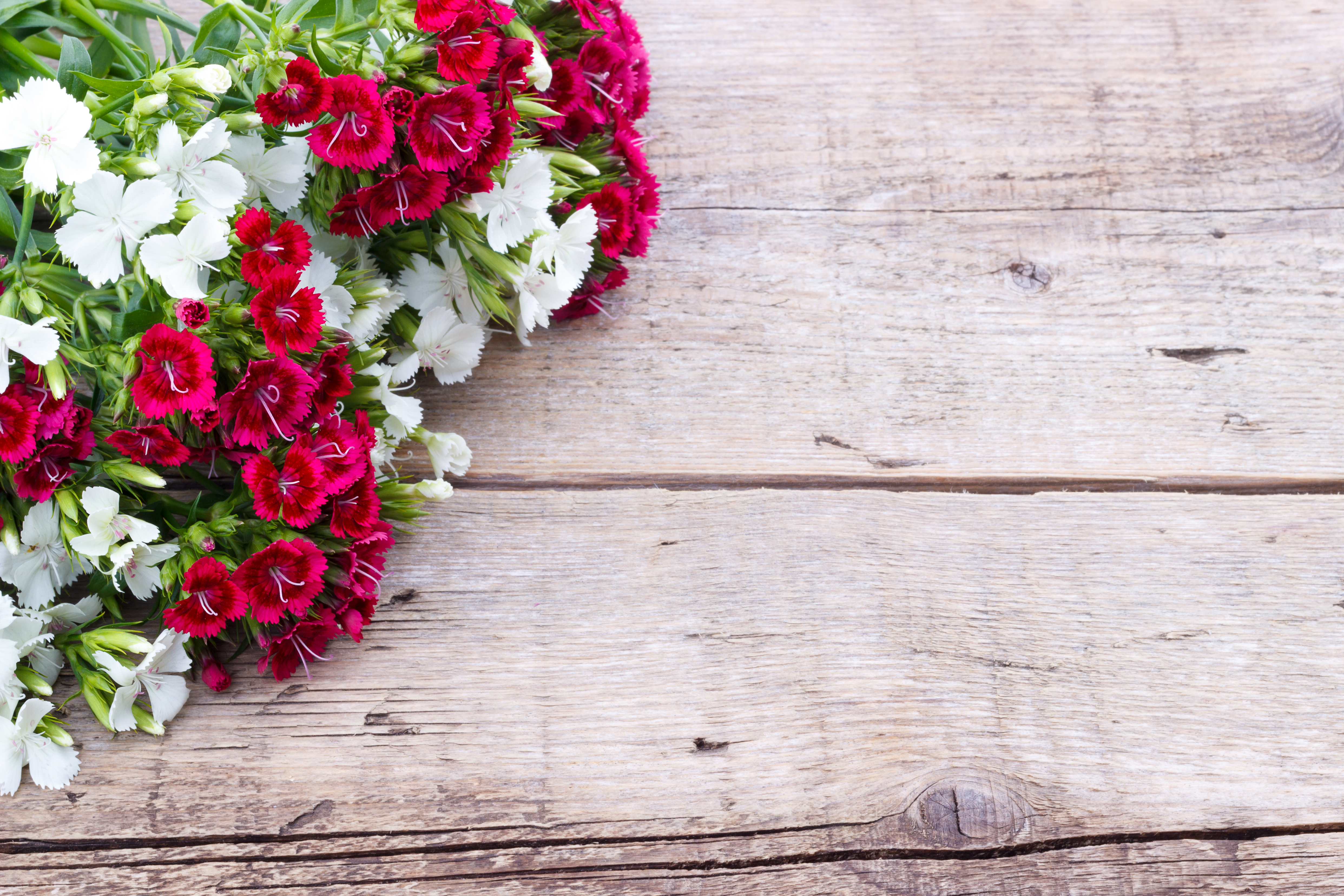 Birthday flowers a perfect guide to send birthday flowers as per fragrant carnations are the birthday flowers for january they are available in a rainbow of colors and blossom sizes these flowers possess a delicate izmirmasajfo
