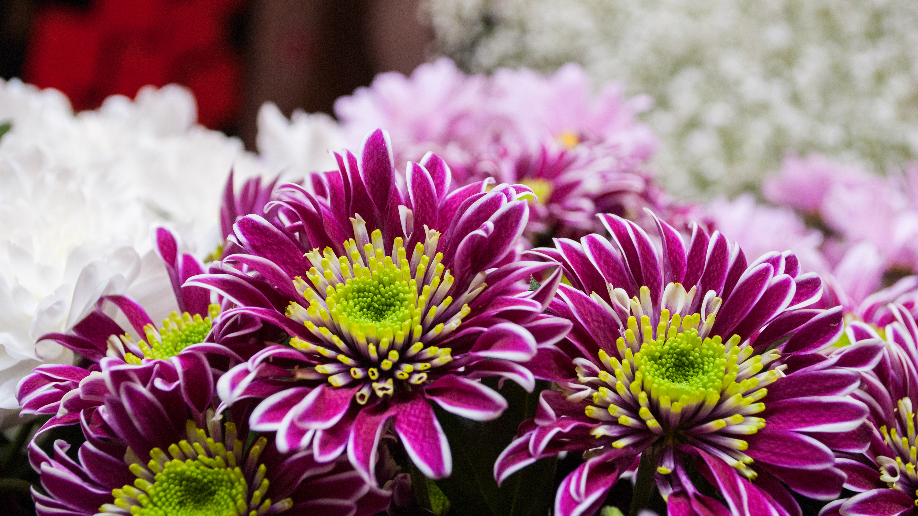 Birthday flowers a perfect guide to send birthday flowers as per send an autumnal chrysanthemum bouquet to the one whose birthday falls in november and make their day the smooth golds oranges and reds of these flowers izmirmasajfo